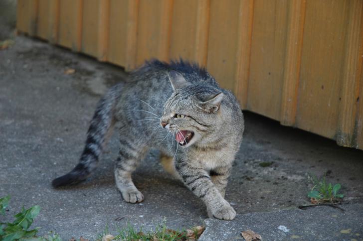 Impariamo a capire il nostro gatto il linguaggio del for Allontanare i gatti