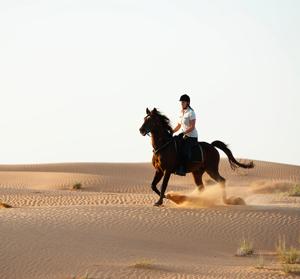 AL FARES DUBAI