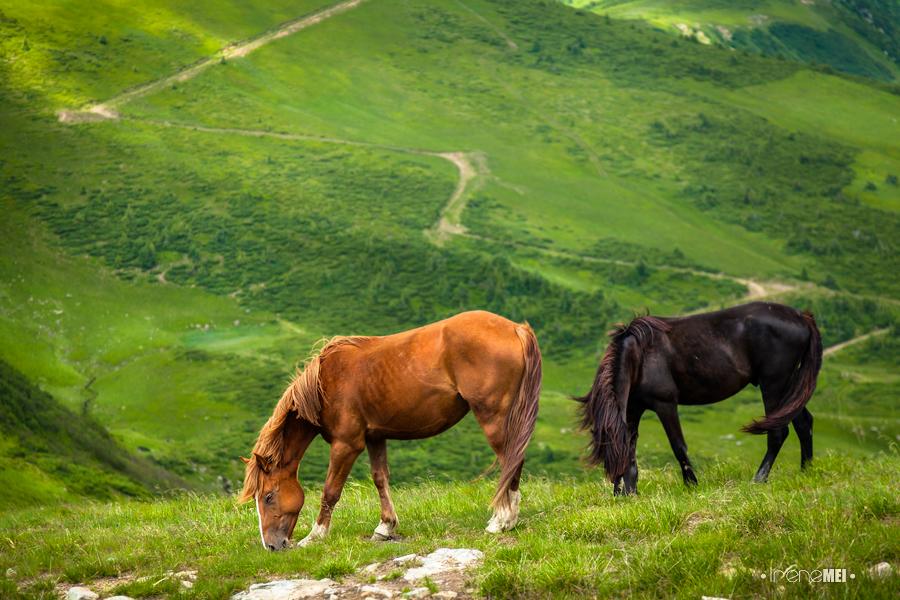montagna cavalli
