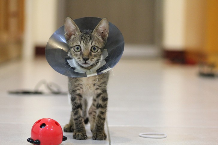 Malattie cutanee del cane e del gatto: le micosi