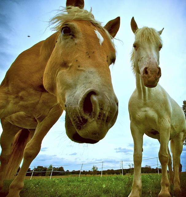 La dermatite recidivante nel cavallo