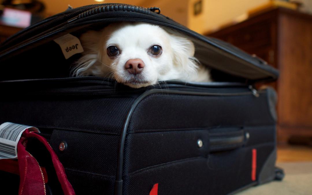 Vacanza con il cane, i consigli per una valigia perfetta!