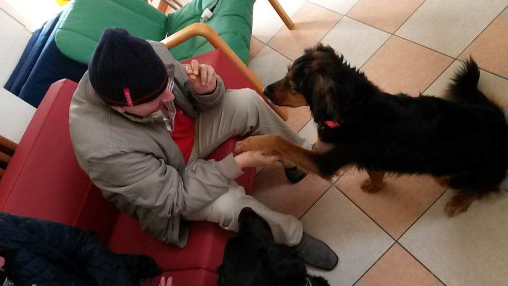 Pet therapy Dakota