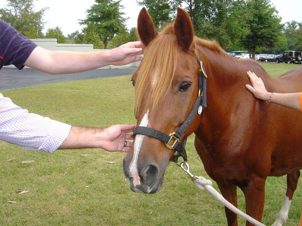 Equine incontri Australia