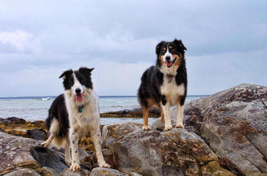 Le spiagge attrezzate per i cani… e i loro padroni!