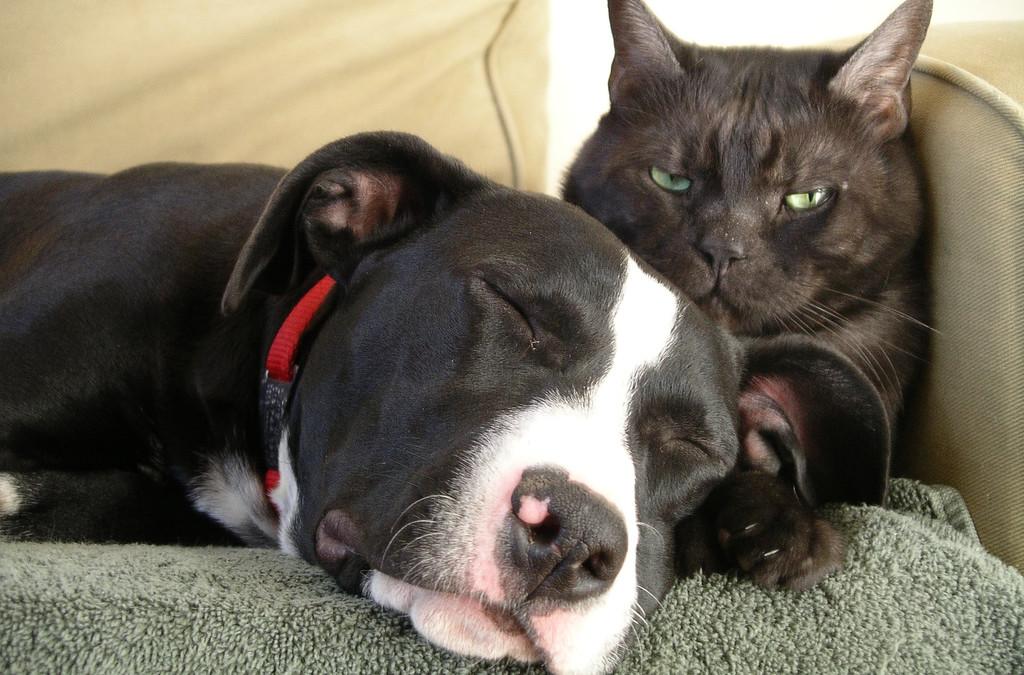 Orecchie e otite negli animali, la prevenzione è la miglior cura