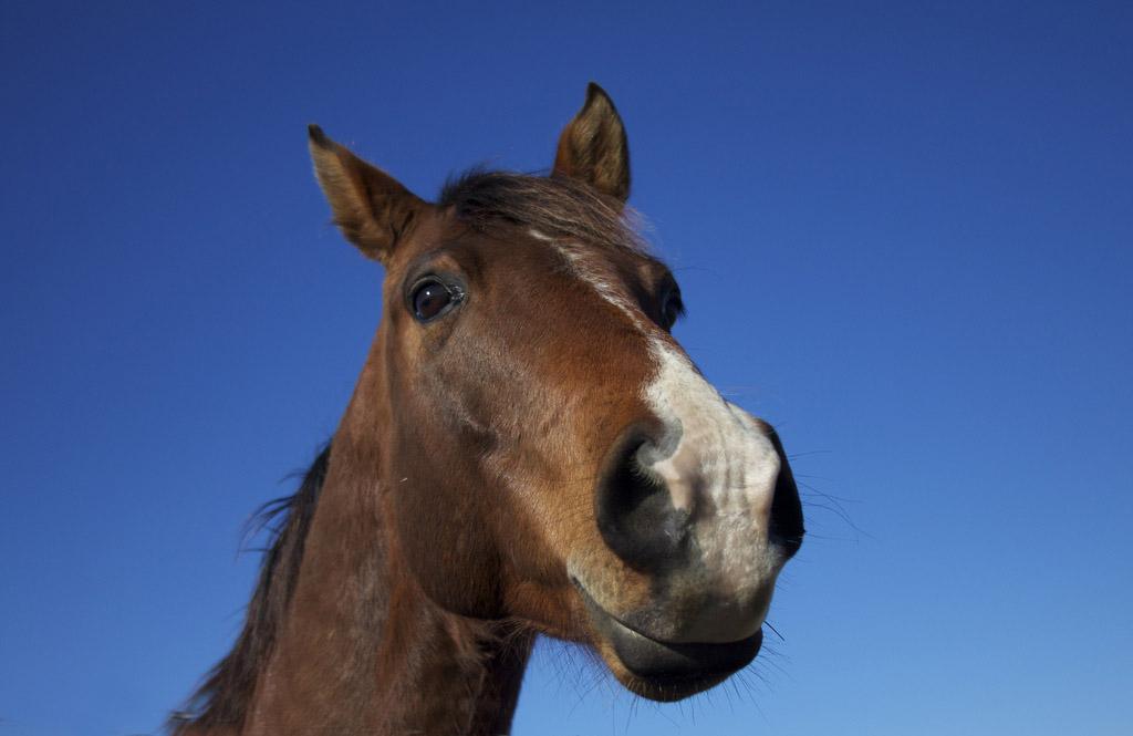Le patologie respiratorie dei nostri amici Cavalli