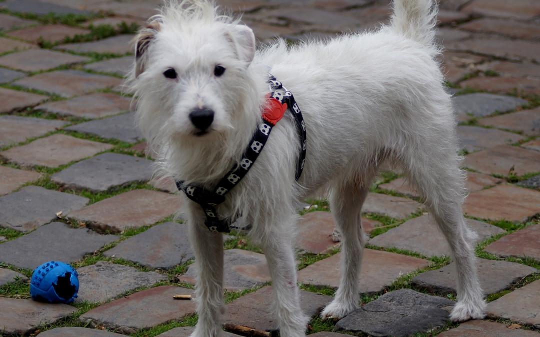 Se il cane inghiotte oggetti… quali emozioni nasconde?