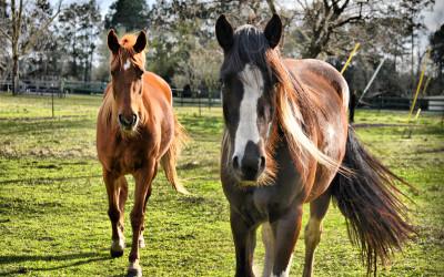 disagio del cavallo texas