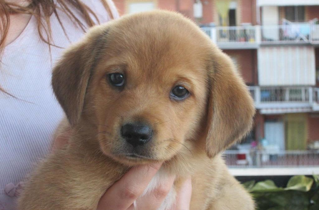 Desiderio di un animale in famiglia? Scopriamo il mondo dell'adozione!