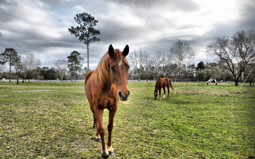 """""""No Foot, no Horse"""" – Il tarlo del piede nel cavallo"""