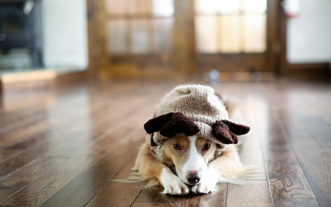 E' arrivato l'inverno anche per loro! Come accudire gli animali in caso di freddo.