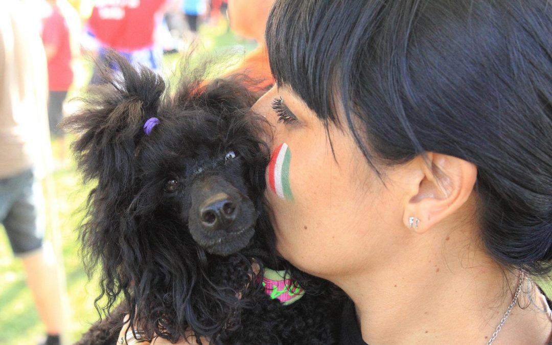Agility dog che passione!
