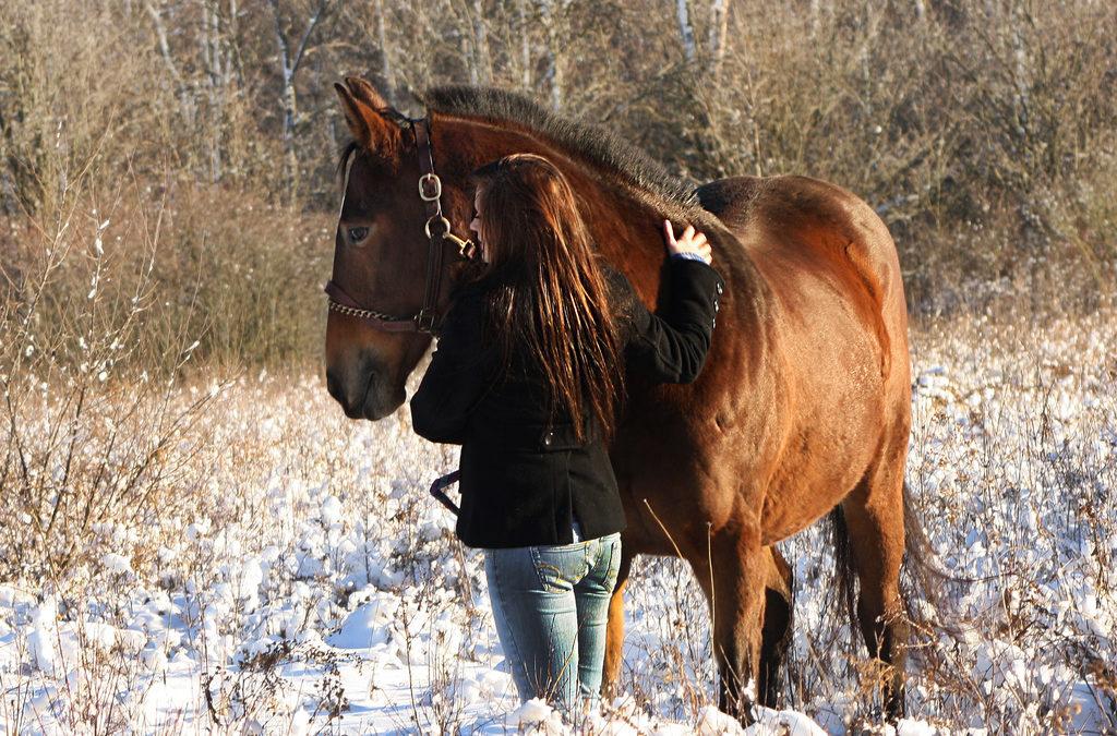 Cavallo anziano…qualche consiglio utile nella gestione dell'animale quando invecchia