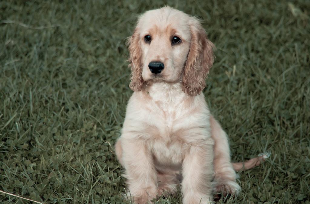 Cucciolo in famiglia: come faccio ad educarlo velocemente a fare i bisogni fuori casa?