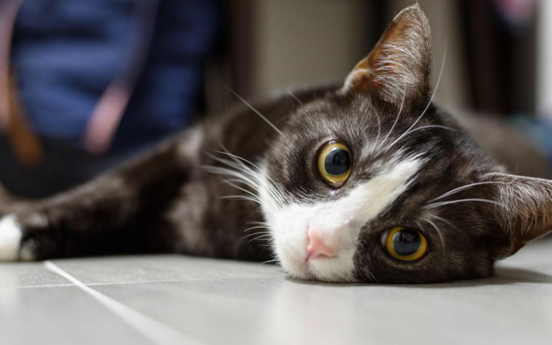 """Un graffietto qui e una strusciatina lì…scopriamo perché il gatto """"marca"""" il territorio!"""
