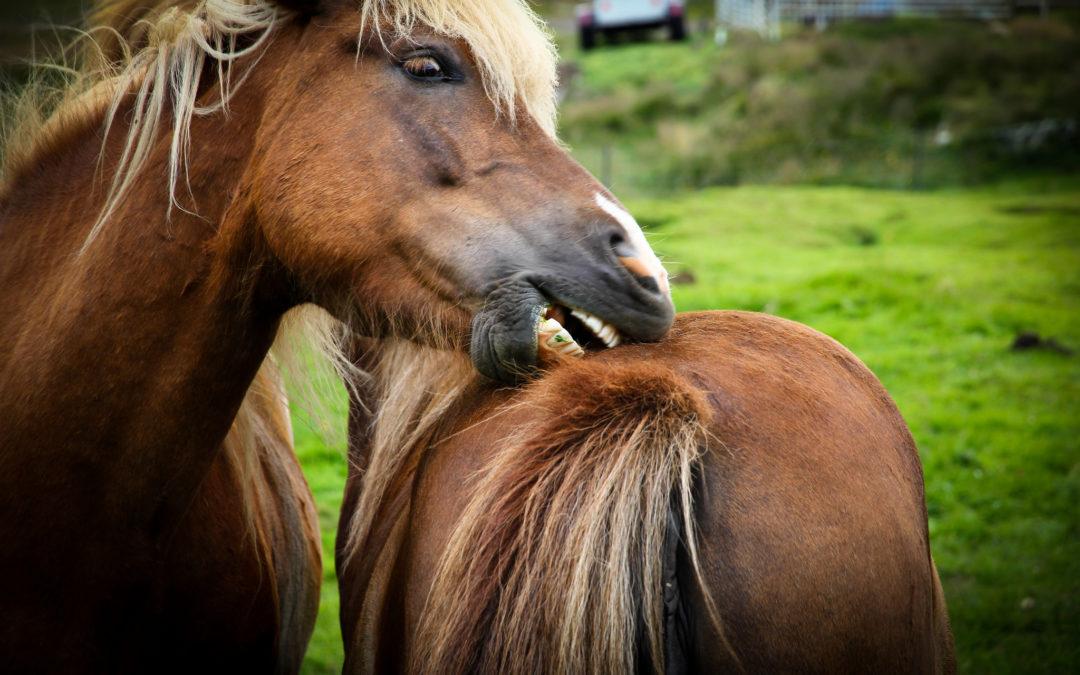 Le ferite nel cavallo