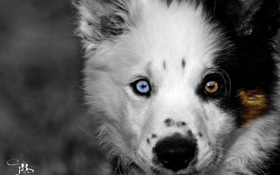Occhio per occhio…scopriamo qualcosa in più sugli occhi dei nostri cani e gatti!