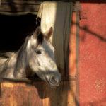 Quando un po' di pulizia basta! Come e perché pulire la stalla del nostro cavallo.