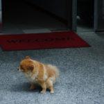 Il mio cucciolo fa la pipì in salotto