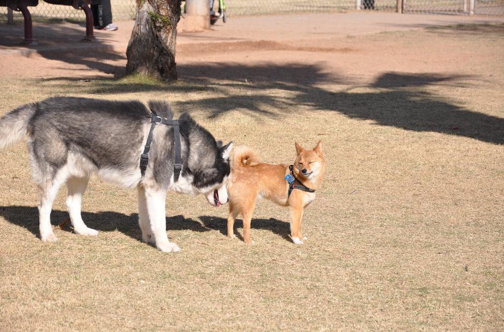 Ghiandole perianali del cane: delle sconosciute molto importanti