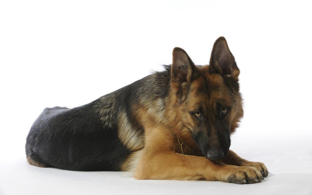 La displasia dell'anca nel cane, una condizione molto frequente nei nostri amici!