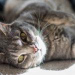 Gatto che urina per tutta la casa: i principali problemi comportamentali