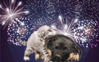 BOTTI DI CAPODANNO, un incubo per cani e gatti. Cosa fare per proteggerli?