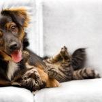 Cani e gatti: buoni propositi per il nuovo anno