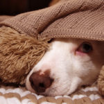 Lo sapevi che anche i cani hanno paura del temporale?