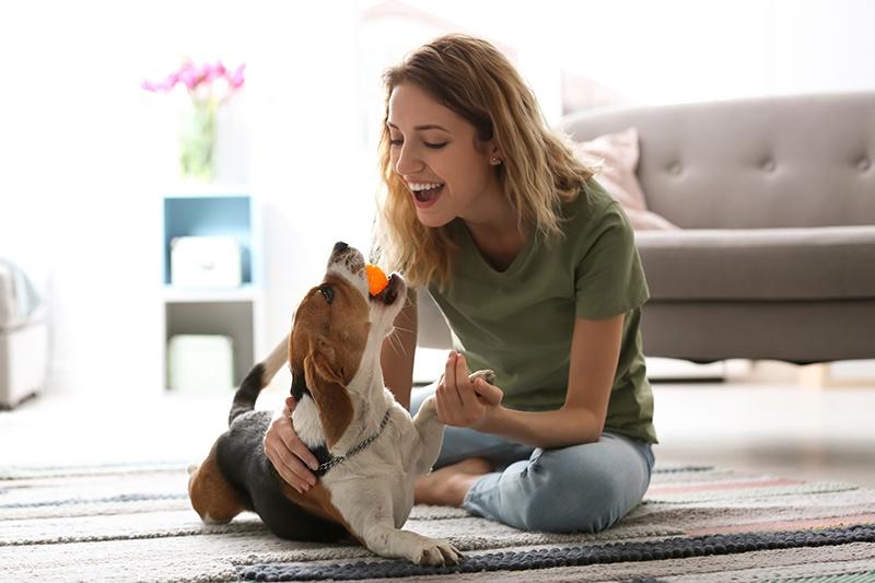 Come sconfiggere la noia: cosa fare in casa col nostro cane