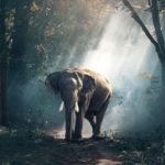 Elefantessa incinta morta in India, una nostra riflessione